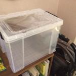 ジャカルタで昆虫飼育箱を自作!