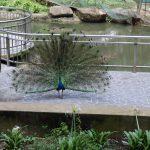 都心にある鳥の楽園!KLバードパーク