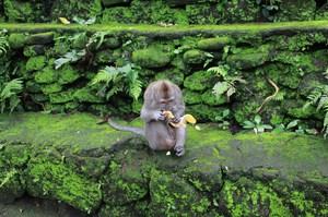 131225_monkeyforest6257.jpg