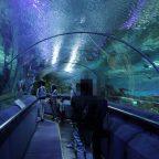 クアラルンプールの水族館!Aquaria KLCC